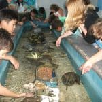 Summer Camp 2019 Tarpon Aquarium